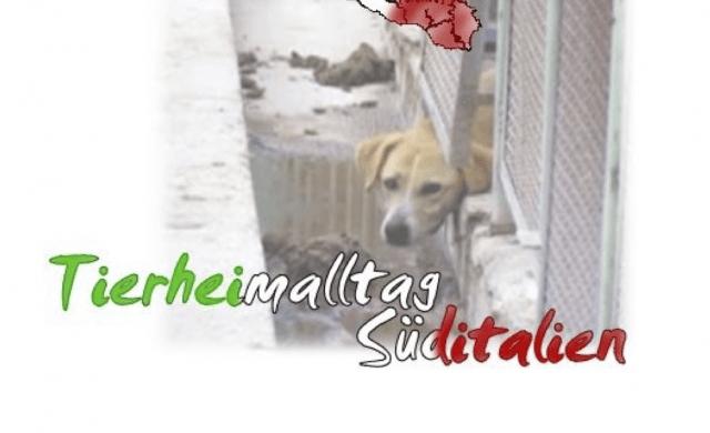 Tierheimalltag in Süditalien