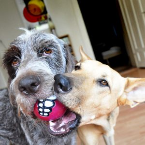 Zwei Hunde im Glück…und das gleich im Doppelpack