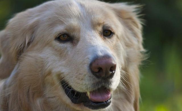 Vincenzo, zum Andenken an einen ganz besonderen Hund…