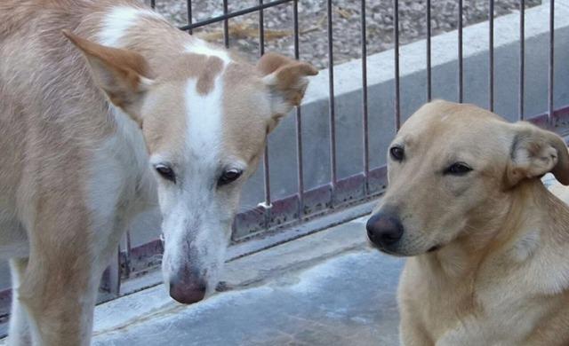 """Unsere """"unsichtbaren"""" Hunde suchen ihre Menschen…"""