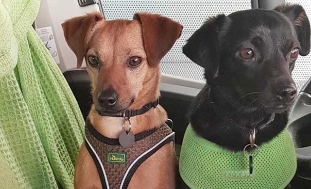 Grunon, Bella und Timido: Die 3 kleinen Strolche aus Spanien haben ihr Zuhause gefunden