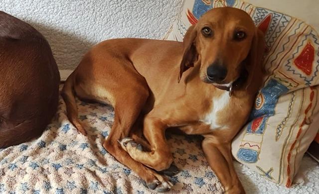 Daisy (II)
