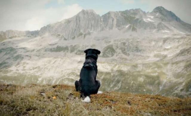 cody-the-dog-days-are-over-filmstill1bb1