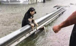 hund-ueberschwemmung-hilfe